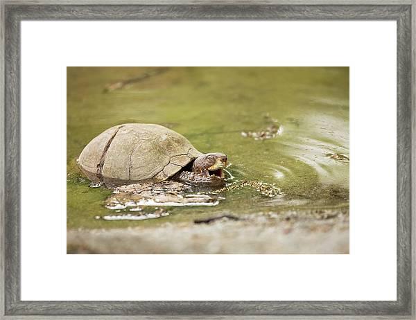 Happy Turtle Framed Print