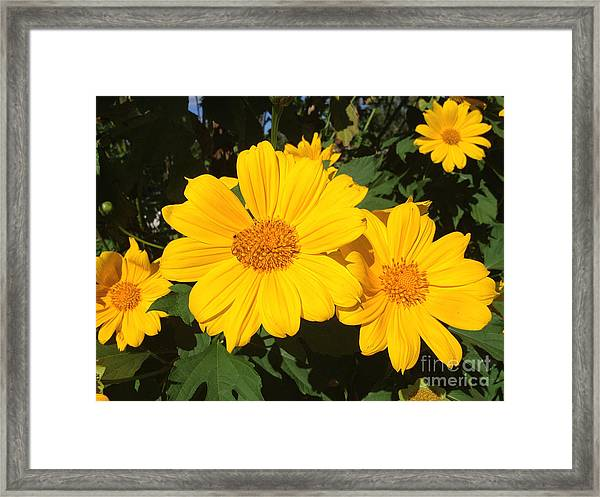 Happy Yellow Framed Print