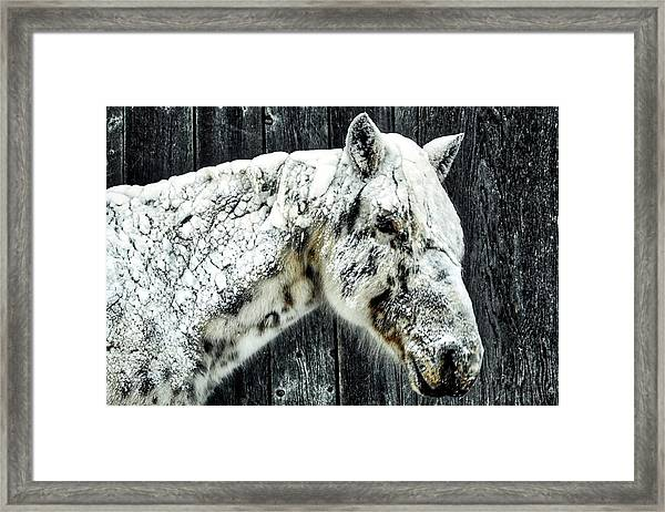 Hard Winter Framed Print