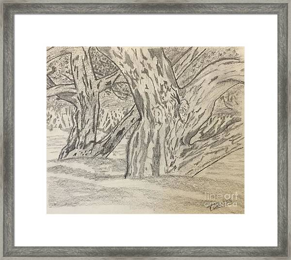 Hardwoods Framed Print