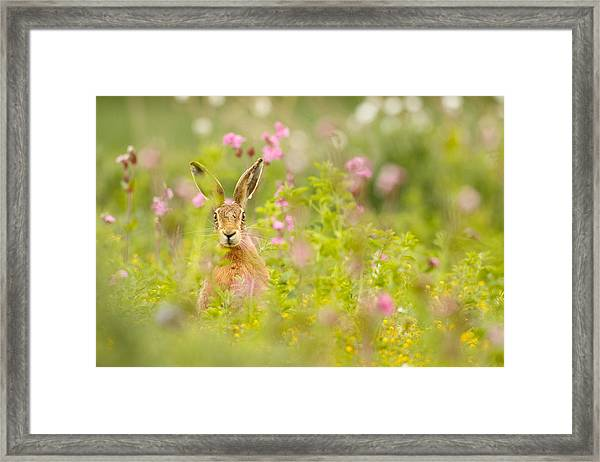 Hare In Campion Framed Print
