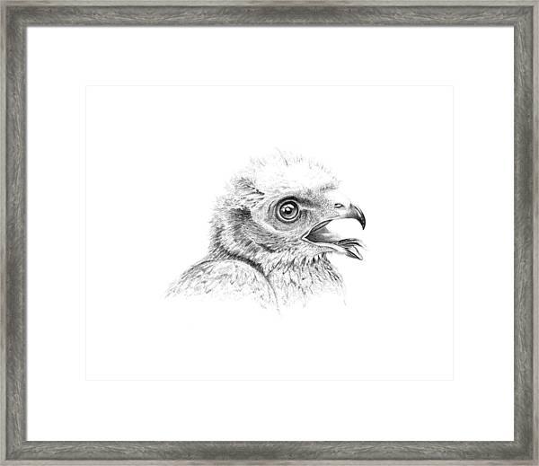 Baby Harrier  Framed Print