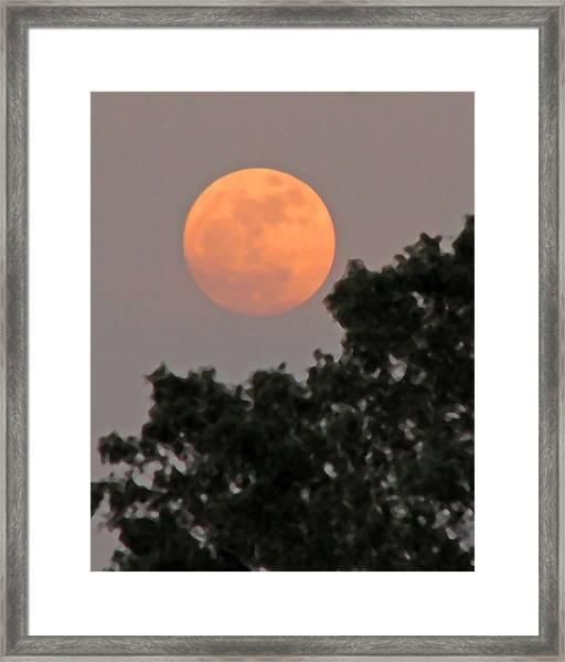 Harvest Moonrise Framed Print