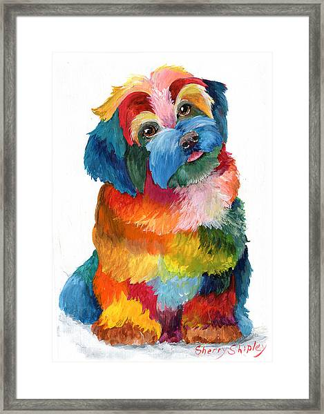 Hava Puppy Havanese Framed Print