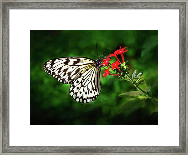 Haven't You Noticed The Butterflies? Framed Print