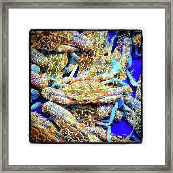 Framed Print featuring the photograph Having A Crabby Trip. But In A Good by Mr Photojimsf