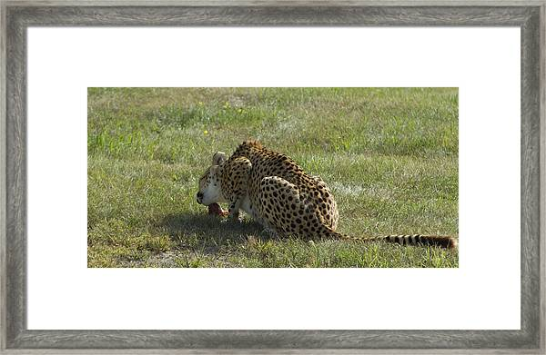 Having Lunch Framed Print