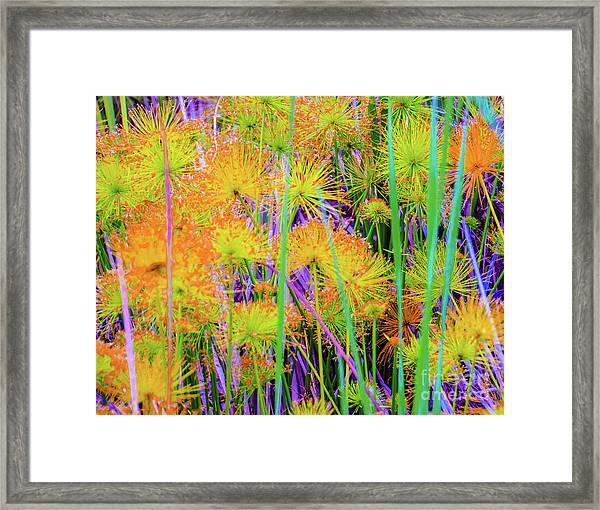 Hawaii Plants And Flowers Framed Print by D Davila