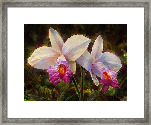 Hawaiian Bamboo Orchid Framed Print