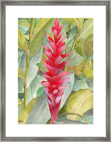Hawaiian Beauty Framed Print