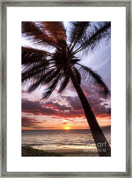 Hawaiian Coconut Palm Sunset Framed Print