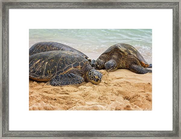 Hawaiian Green Sea Turtles 1 - Oahu Hawaii Framed Print