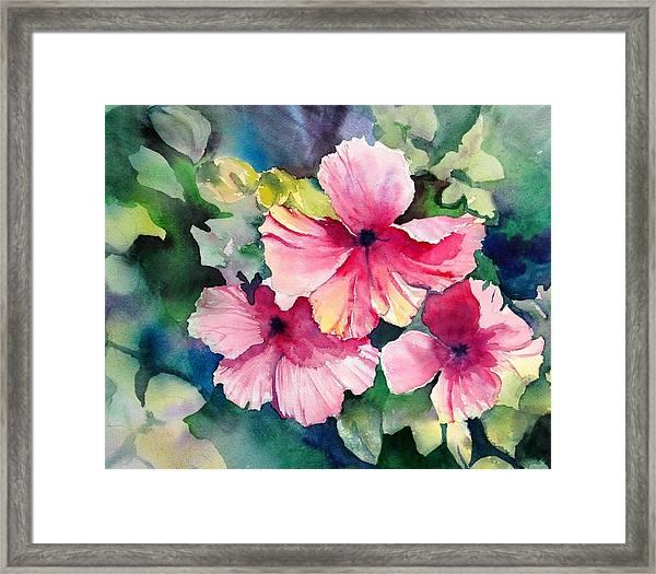 Hawaiian Hibiscus Framed Print