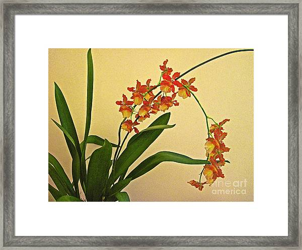 Hawaiian Orchid Spray Framed Print