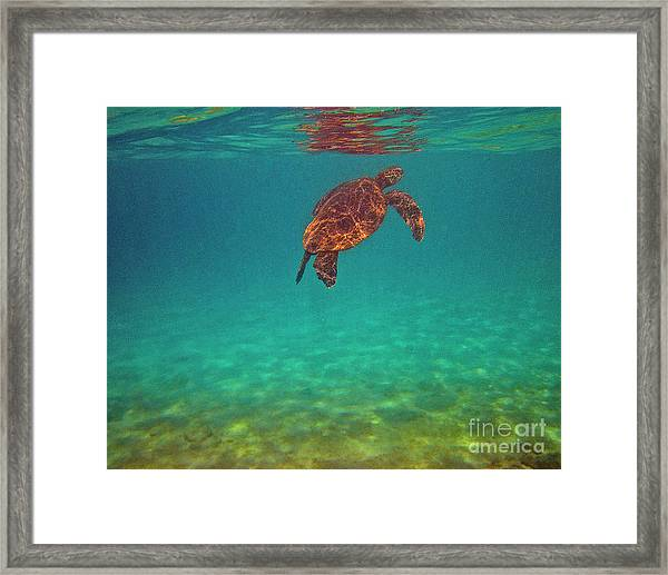 Hawaiian Sea Turtle - Floating Framed Print