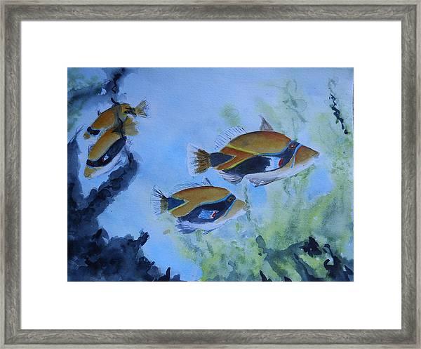 Hawaiian Trigger Fish Framed Print