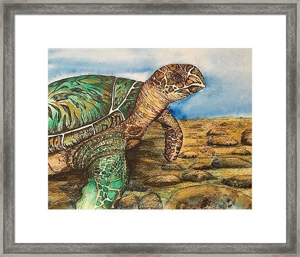 Hawkbilled Sea Turtle Framed Print