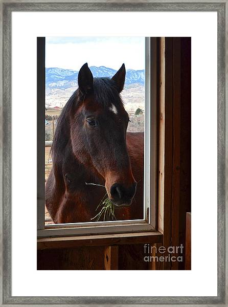 Hay There Framed Print