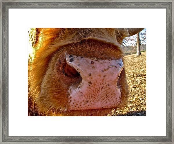 Hay You Smell Good Framed Print