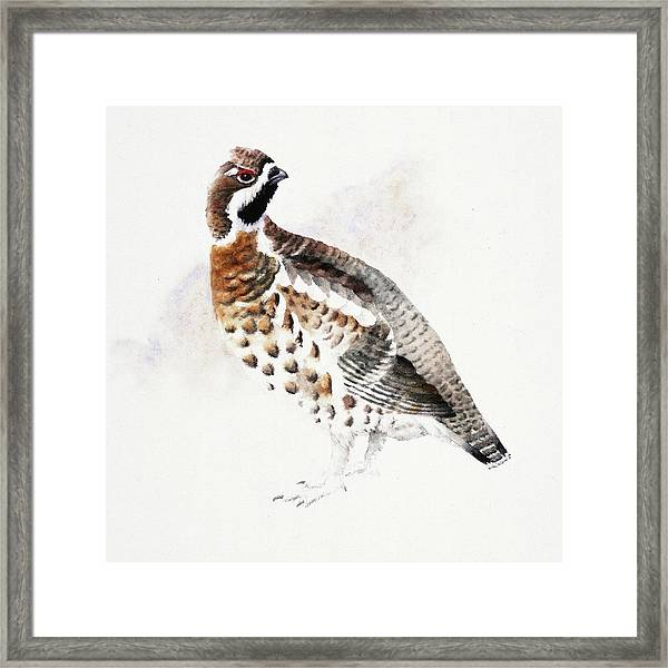 Hazel Grouse Framed Print