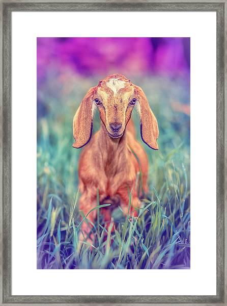 Hazel Framed Print