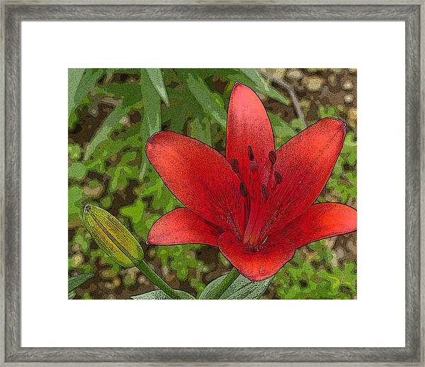 Hazelle's Red Lily Framed Print