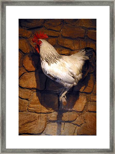 He Crowed No More Framed Print by Jez C Self
