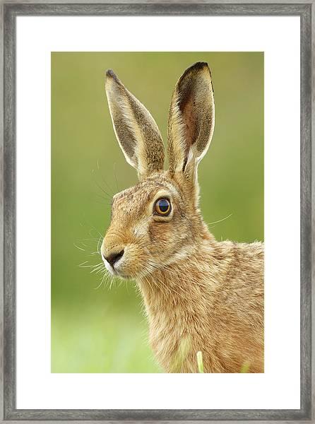 Head Turner Framed Print
