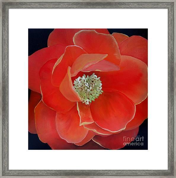 Heart-centered Rose Framed Print