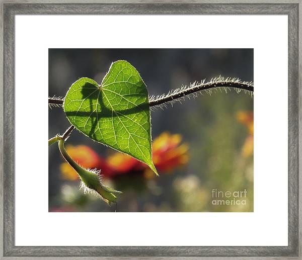 Heart Leaf 1 Framed Print