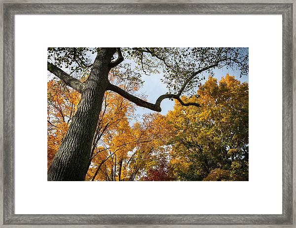 Heart Of Fall Framed Print