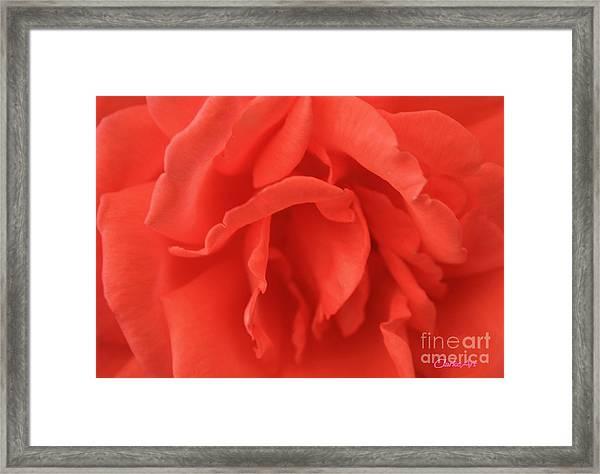 Yoni Rose Framed Print