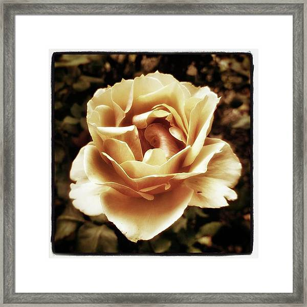 Framed Print featuring the photograph Heart Rose. Imagine Your Heart Is A by Mr Photojimsf