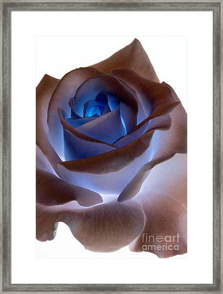Heartglow Rose Framed Print
