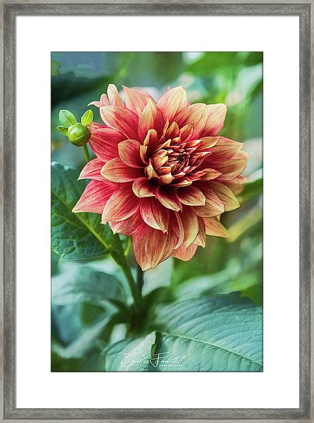 Heat Of Summer Framed Print