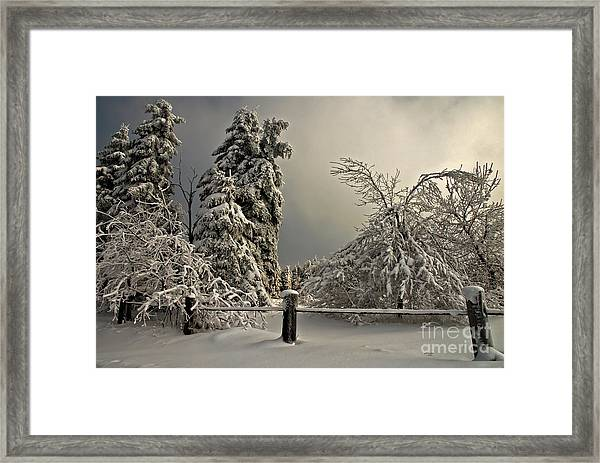 Framed Print featuring the photograph Heavy Laden by Lois Bryan
