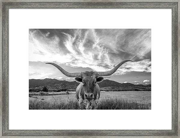 Heber Valley Longhorn Framed Print