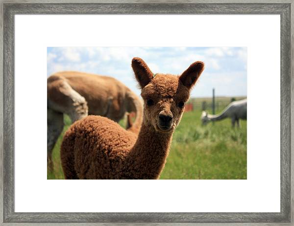 Hello Baby Framed Print