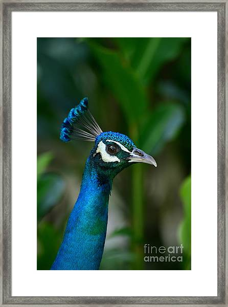 Hello Beautiful Framed Print by Scott and Amanda Anderson