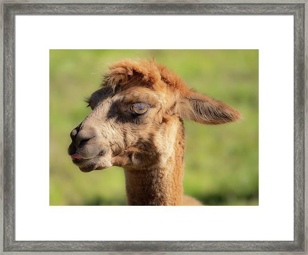 Hello Darling Framed Print