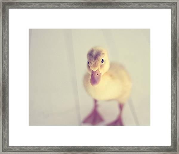 Hello Ducky Framed Print