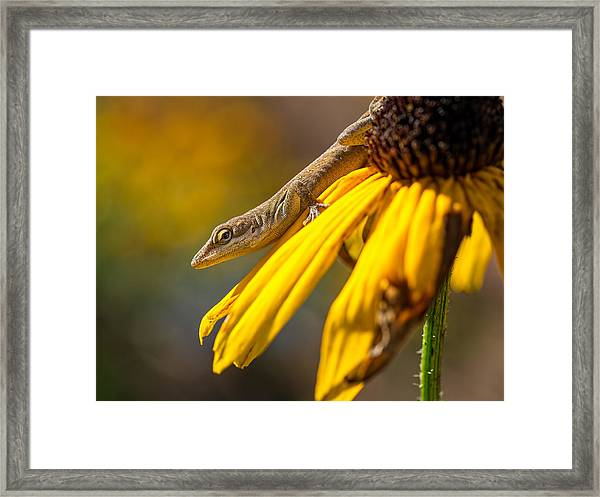 Hello There Framed Print