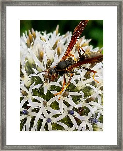 Hello, Wasp Framed Print