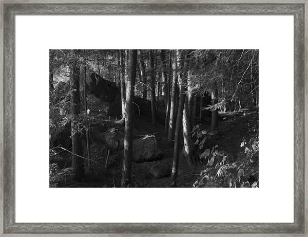 Hemlocks Framed Print