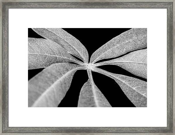 Hemp Tree Leaf Framed Print