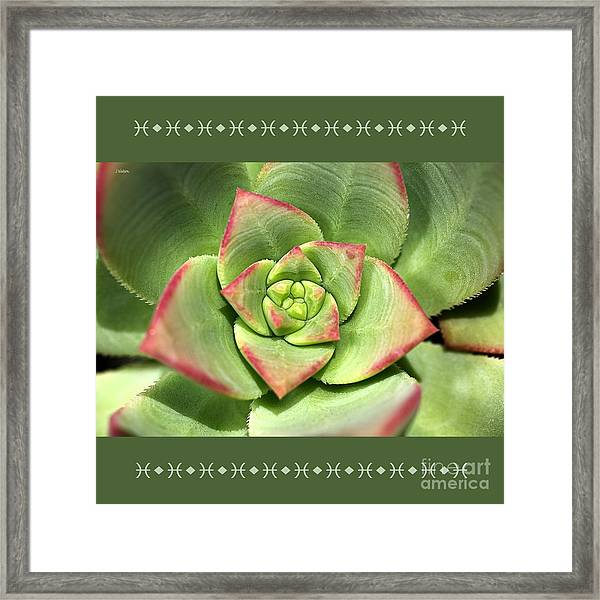 Hens And Chicks Succulent And Design Framed Print