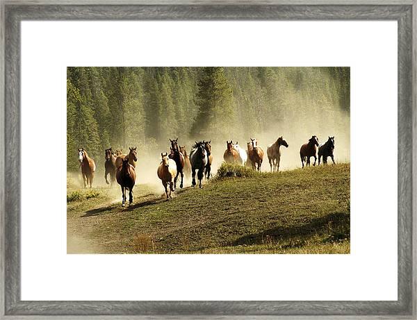 Herd Of Wild Horses Framed Print