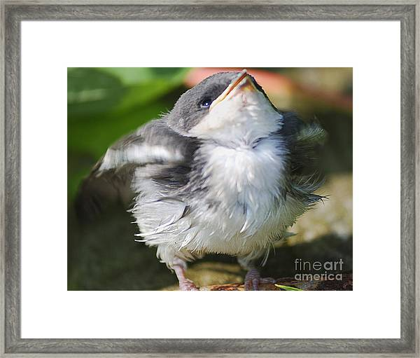 Here Comes Mommy Framed Print