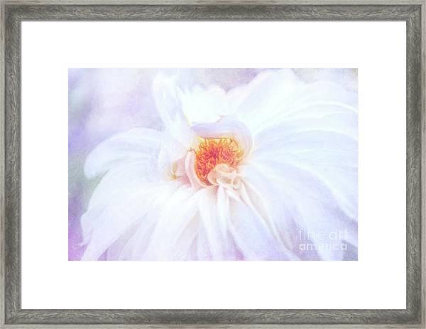 Here Comes The Bride - A Beautiful White Dahlia Framed Print