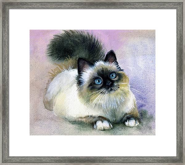 Here Kitty Framed Print